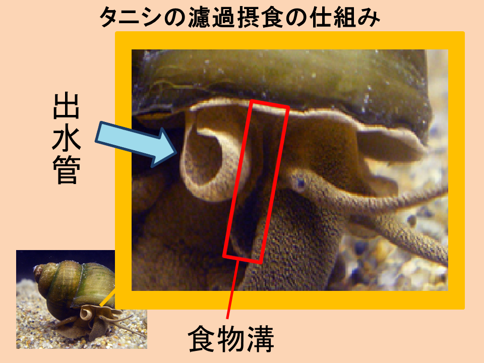 宮崎研究所水質浄化①